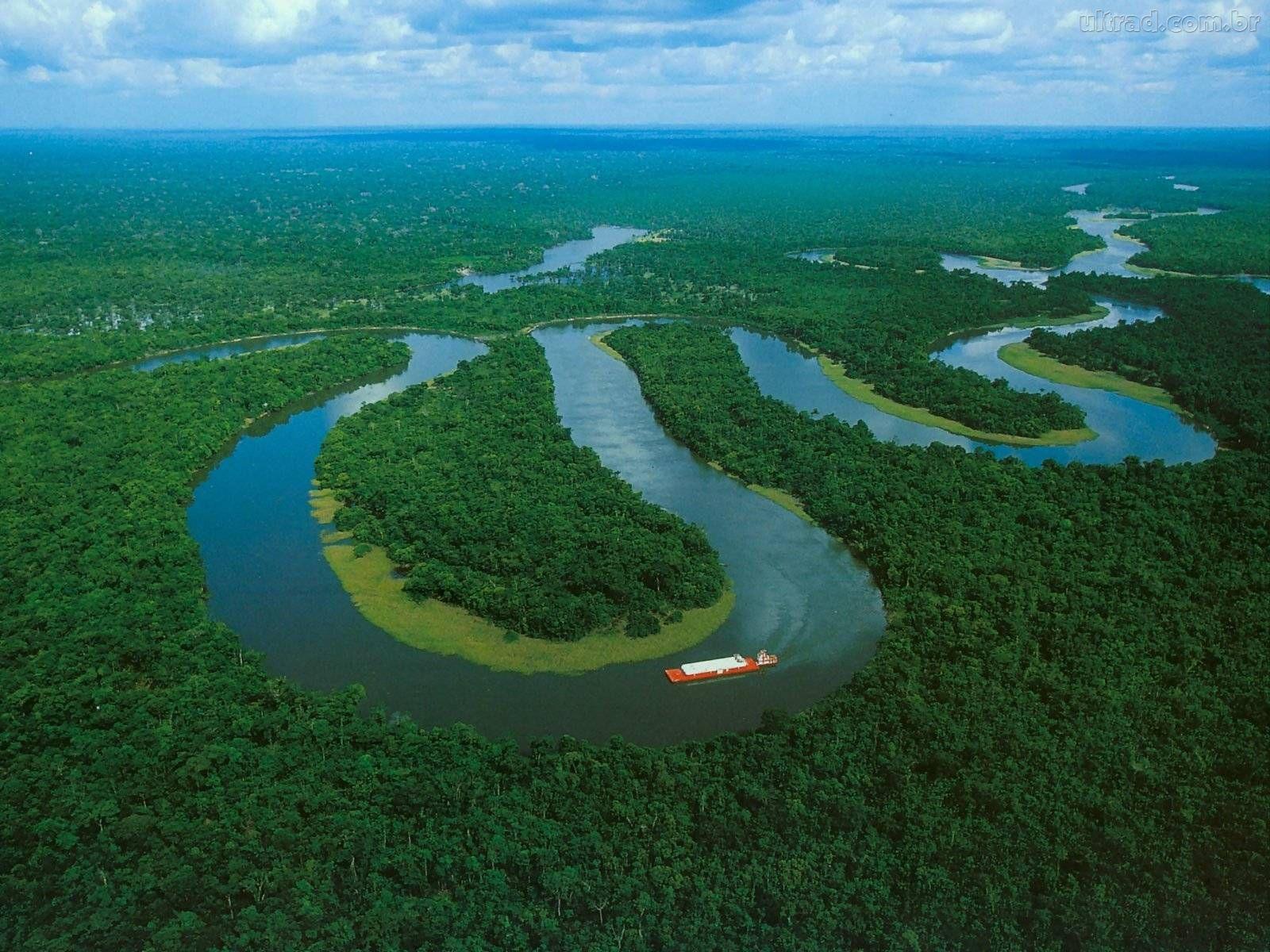 Trópusi őserdők