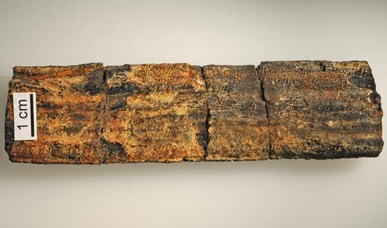400 millió éves