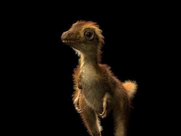 Bébi Tirannoszaurusz